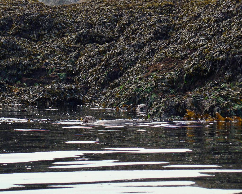 2009-08-17 Cadboro Bay 062 copy