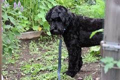 skippy in the garden 7