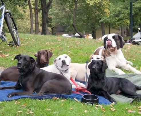dog park in new york