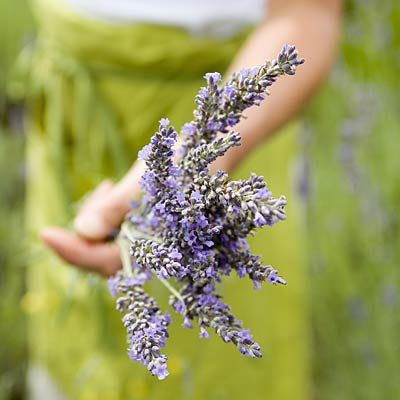 Lavender isn't just a pretty plant; it's also packed with health benefits. Its fragrance is soothing (helping you to fall asleep), and it contains antioxidants known as polyphenols that fight belly bloating. | health.com