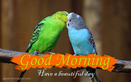 Have A Beautiful Day Morning Wishes With Romantic Birds Pics Good
