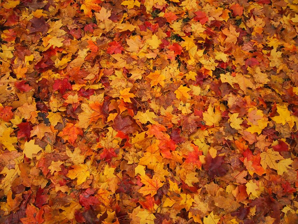 Risultati immagini per tappeto di foglie