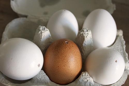 ausgeblasene Eier