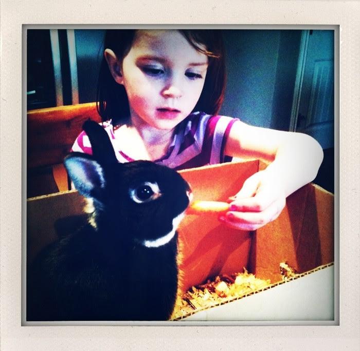 V + Bunny