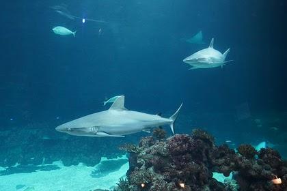 В Египте заявили о безопасности моря после новостей об атаке акулы на дайвера