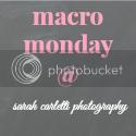 Sarah Carletti Photograhy