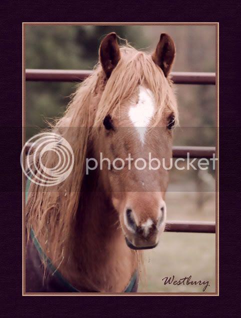 wild horses,mustangs