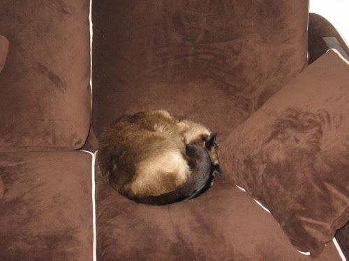 Halvah attempting camouflage