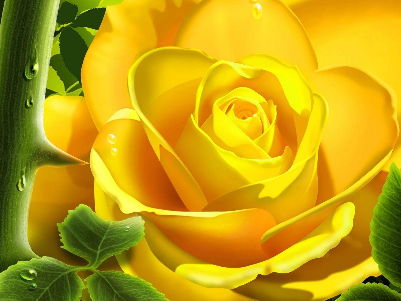 Rosa Amarilla Artística Imágenes Y Fotos