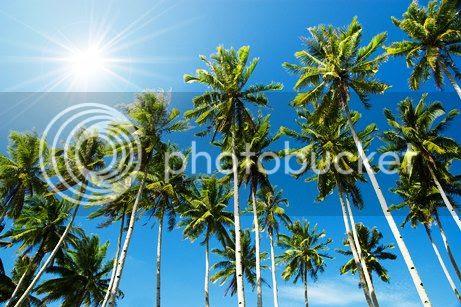 photo 06 Top 10 Benefits of Coconut Water_zps69imhav1.jpg