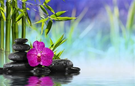 Wallpaper water, bamboo, bamboo, orchid, flower, flower