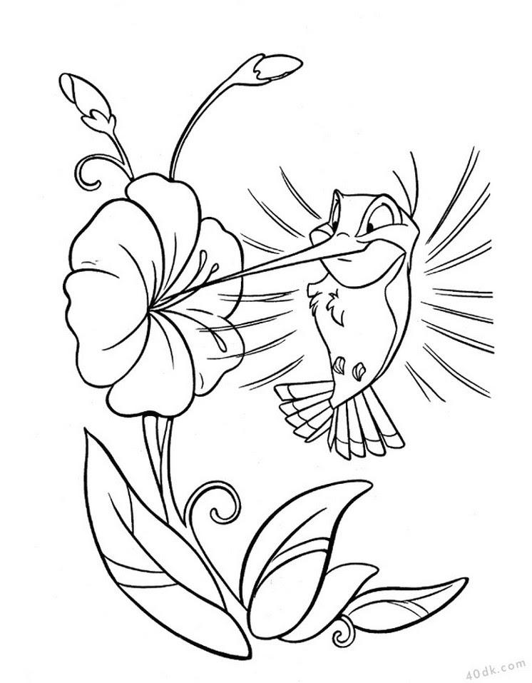 40dkcom Sinek Kuşu Boyama Sayfası 56 40dk Eğitim Bilim