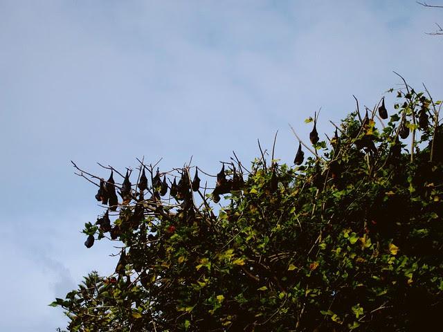 1110 - Bats