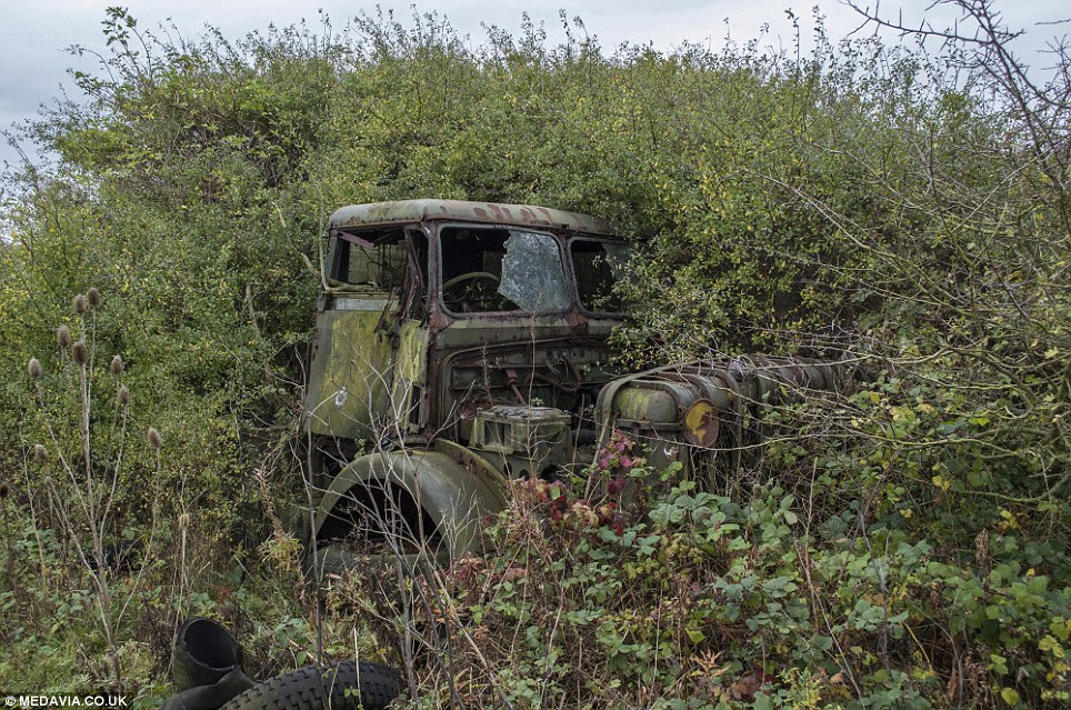 Lost in the undergrowth: This military truck, which could be a Bedford, lies among the collection of decommissioned military vehicles, farming machinery and lorries