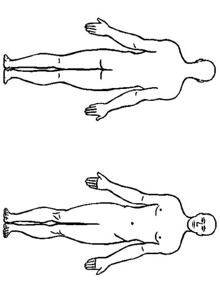 educational human body coloring pages 8