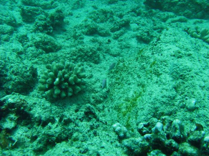 scuba diving oahu 209
