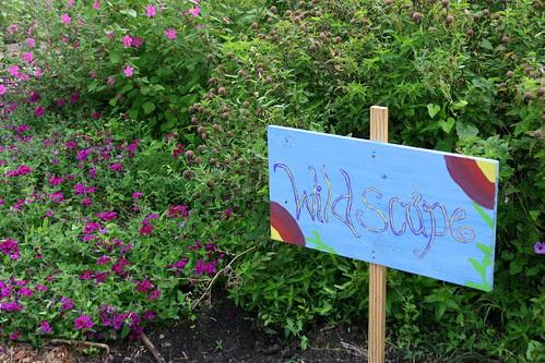 school garden wildscape