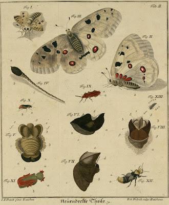 schaeffer insect book