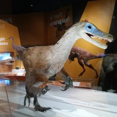 American Museum of Natural History Dinosaurs Among Us exhibit