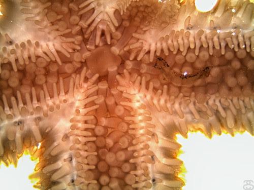 Starfish & Flat Worm