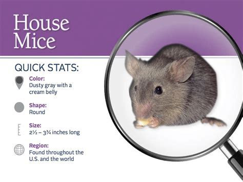 House Mice Profile   Control & Identification of Mice