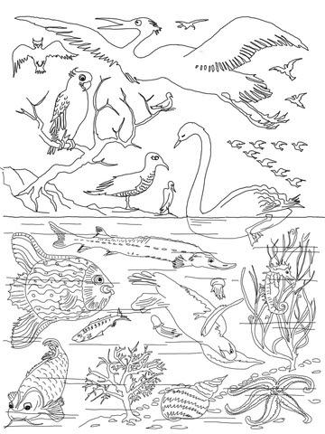 Dibujo De Quinto Día De La Creación Para Colorear Dibujos Para