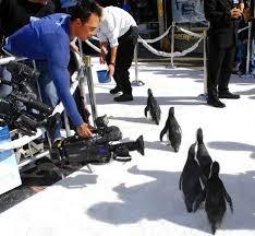 All eyes on the Penguin