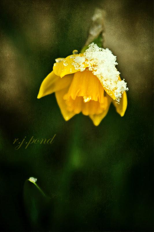~ First Spring Flower ~