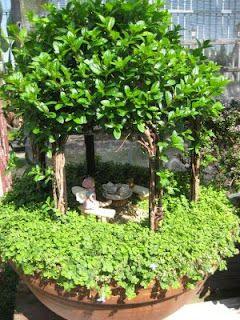 Fairy Arbor