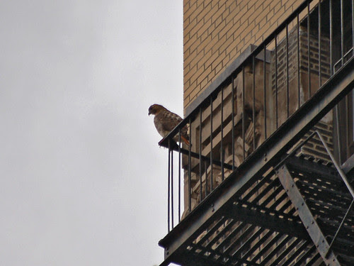 110th St Hawk