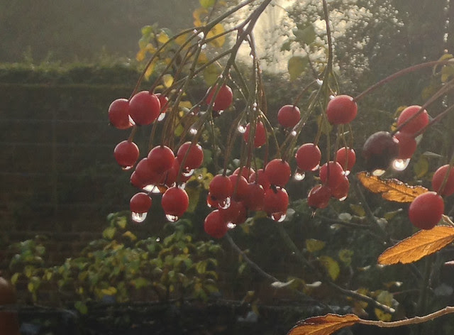 Dew-berries Capel