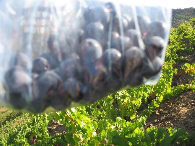 muestra de uva