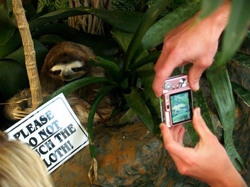 Sloth-arazzis