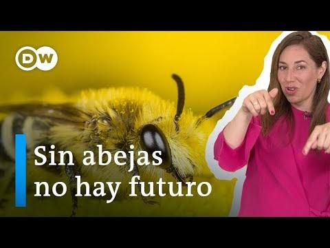 ¿Por qué no podemos vivir sin las abejas?