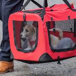 ジョンソン英首相、保護犬のディリン君を引き取る−生後15週間 - ブルームバーグ