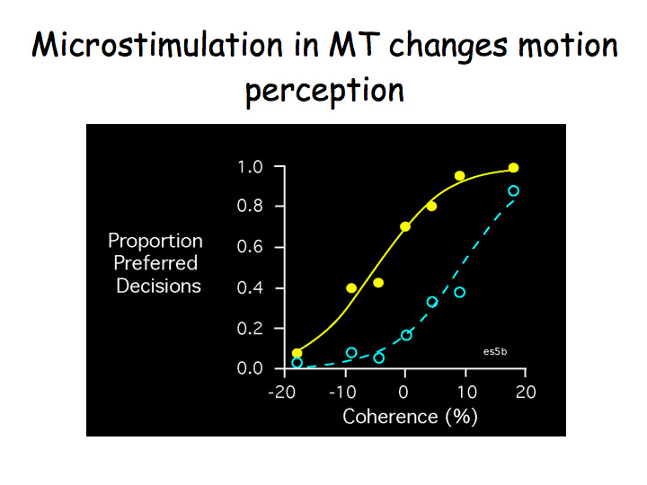 Perception Lecture Notes Visual Motion Perception