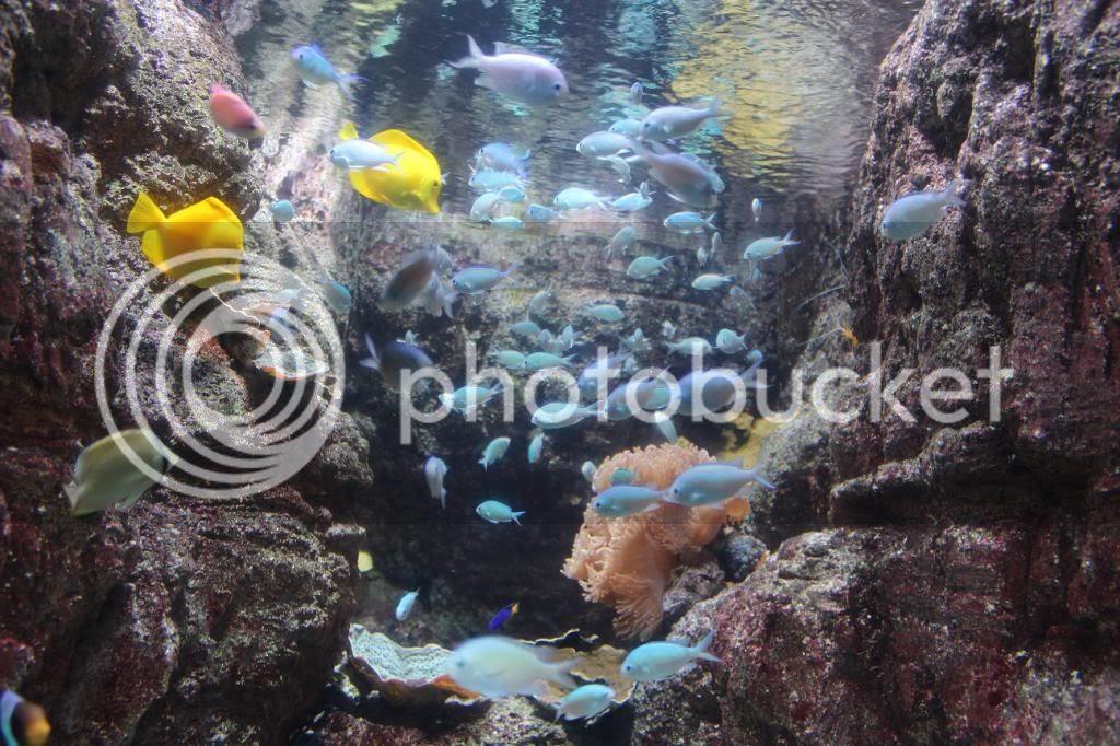 CineAqua Aquarium Fish