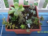 Growing!