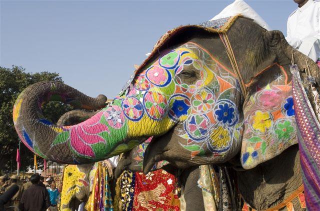Animales Sagrados De La India Universo Hindu