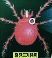 털진드기 유충