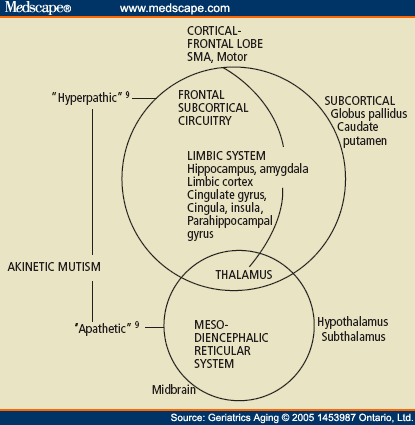 The Neural Pathways in Akinetic Mutism