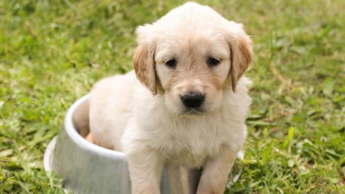 Hábitos cotidianos que (seguramente) haces con tu perro que no le benefician nada