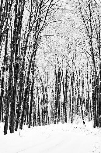 Orillia - Winter Roads 5