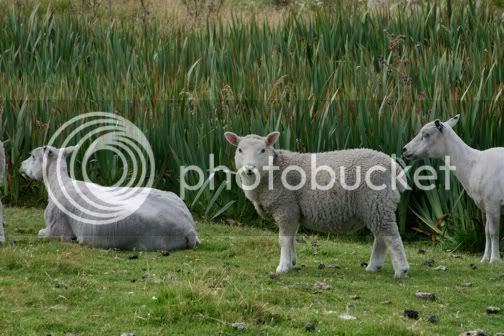 shetland,jamieson & smith,susan crawford
