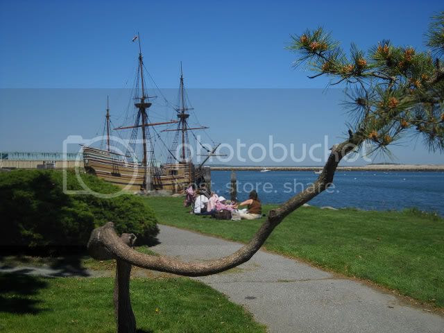 The Mayflower II and funky tree