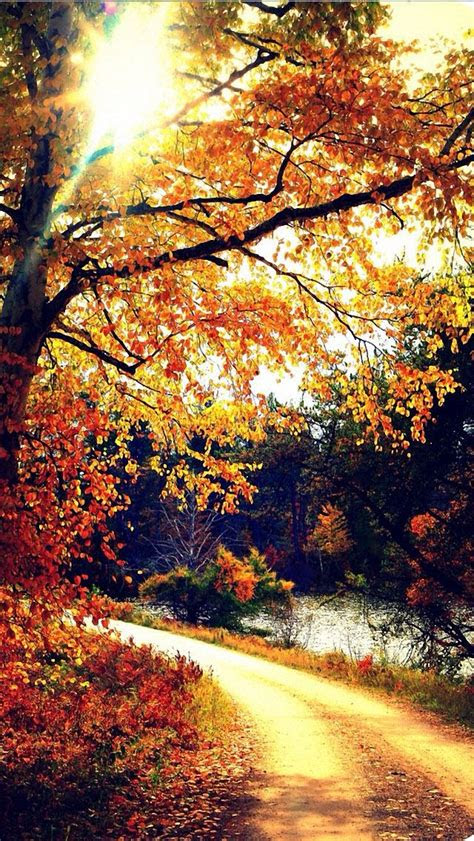 autumn iphone  wallpaper backgrounds pinterest