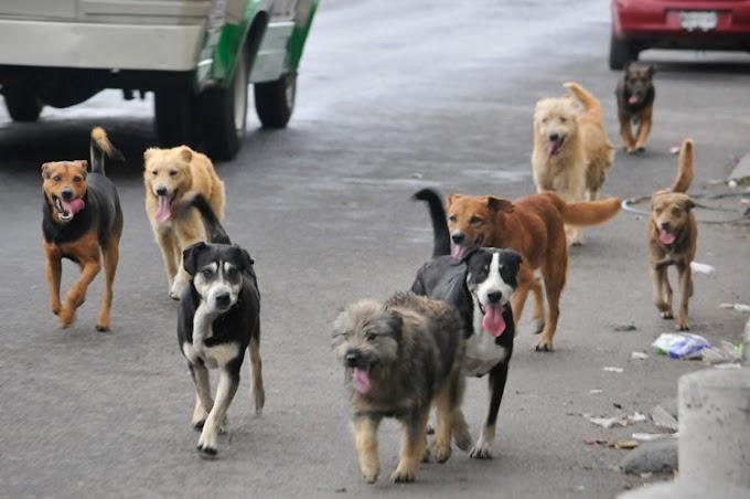 Un cura rescata perritos de la calle y tiene la mejor idea para promover su adopción en Misa