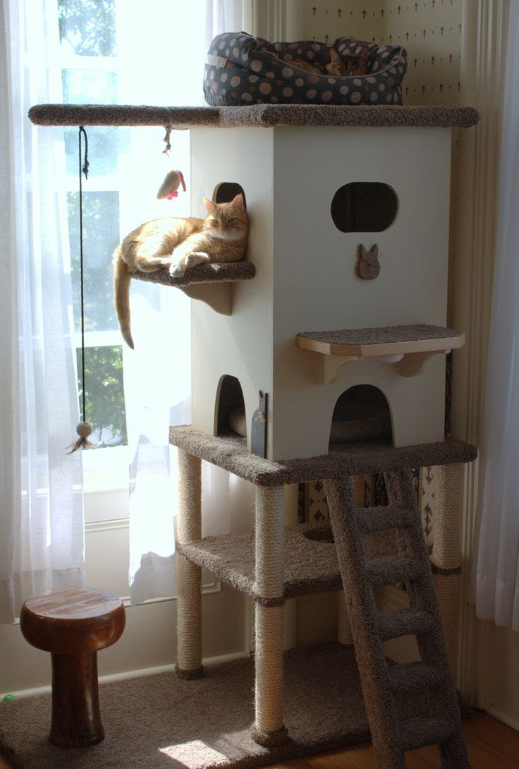 Cat Home. They would love it