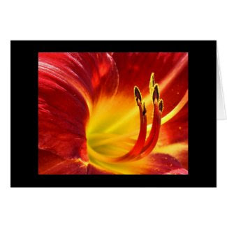 Red Daylily card