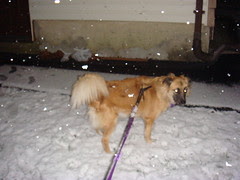 Snicky's first snow
